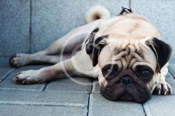 Got Pet Allergies?