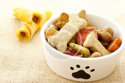 6 Common Pet Food Myths